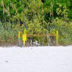 """Ein """"Turtle Nest"""" am Strandbereich."""