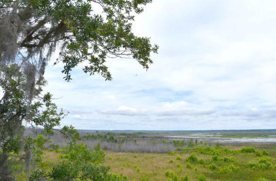 Paynes Praire Preserve State Park