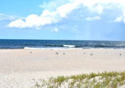 Amelia Island - Florida Insel